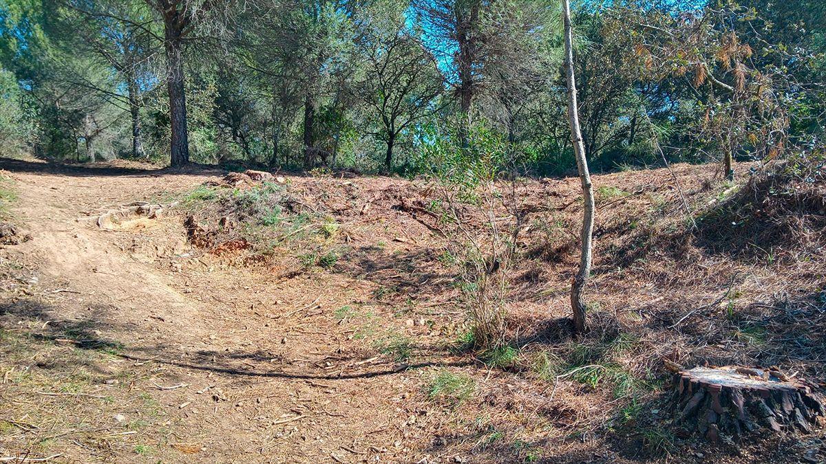 """Ecologistas denuncian """"malas prácticas forestales"""" en Los Villares."""
