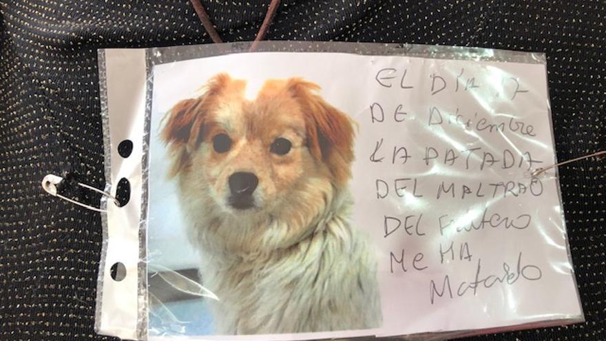 La  foto de Koki, el perro que murió tras ser pateado por un comerciante en Valladolid.