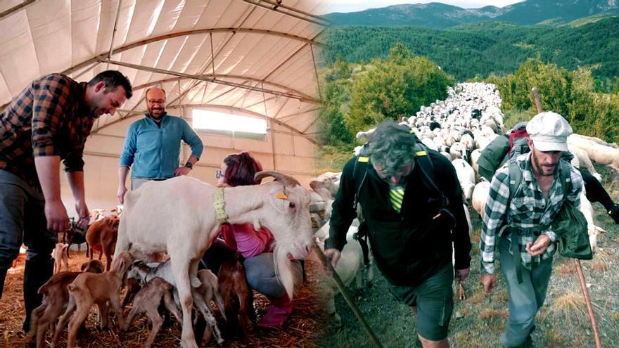 """'Ruralitas' y 'Entre ovejas', los dos últimos formatos """"rurales"""" de TVE"""