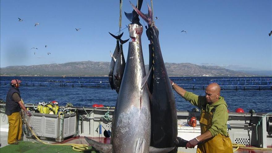 La pesca del atún rojo y del pez espada, en juego en la reunión en Sudáfrica