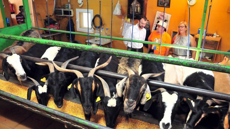 José Miguel Ortega y Francisca Olga Pérez agradecieron este viernes la visita de cortesía que le hicieron la primera teniente de alcalde del Ayuntamiento de San Bartolomé de Tirajana, Elena Álamo Vega, y el concejal de Agricultura y Ganadería, José Carlos Álamo.