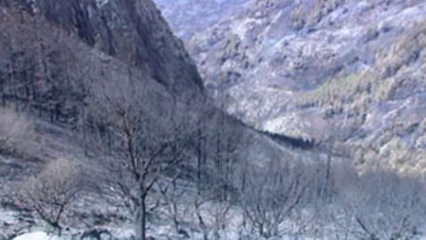 Inmediaciones del Roque de Agando, quemada. (FOTOGRAMA DE RTVC).