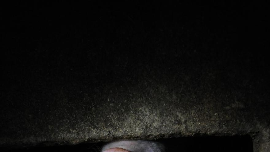 Granja de cerdos en Finlandia / Jo-Anne McArthur
