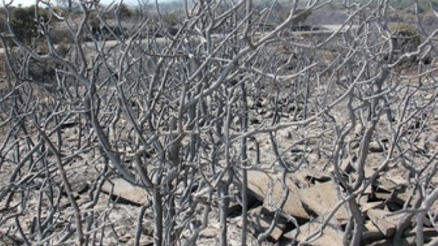 Consecunecias del incendio en el Empordà