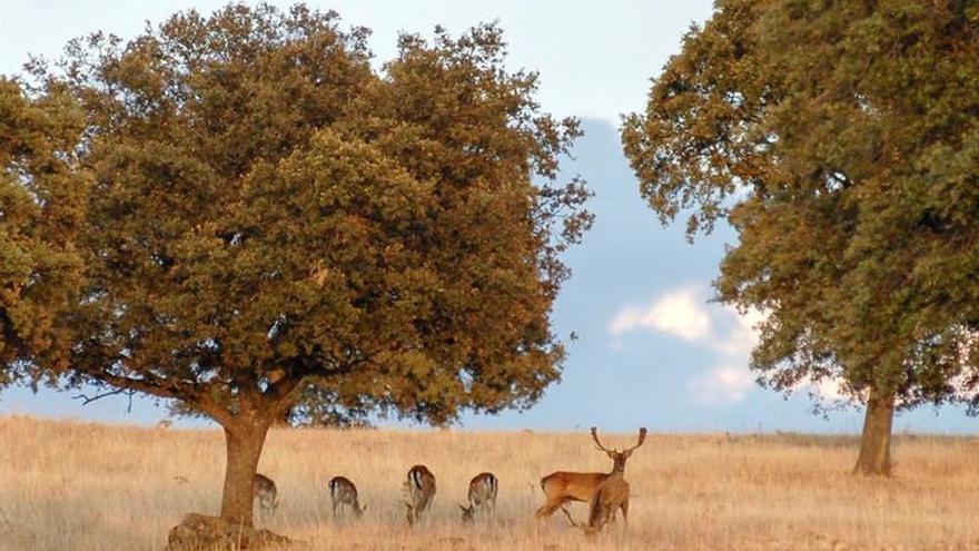 El otoño da la bienvenida en Jaén a una berrea tardía por la falta de lluvia