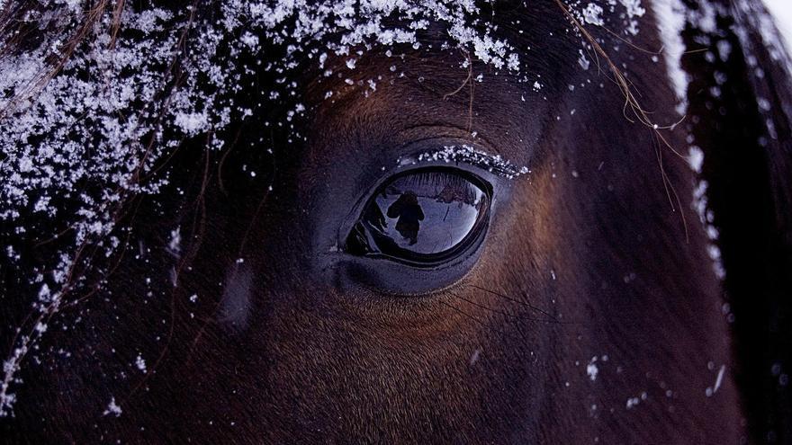 Ojo nohumano y humano