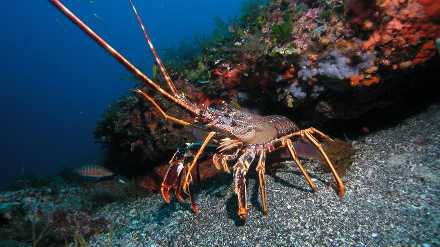 Fondo marino en las Islas Columbretes / D.Kersting-F.Biodiversidad.
