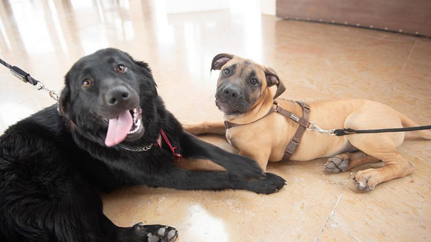 Dos perros en la Feria Animundo del Cabildo de Gran Canaria.