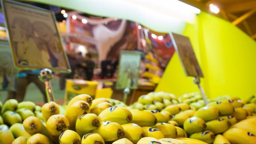 Manillas de fruta con el distintivo de Plátano de Canarias