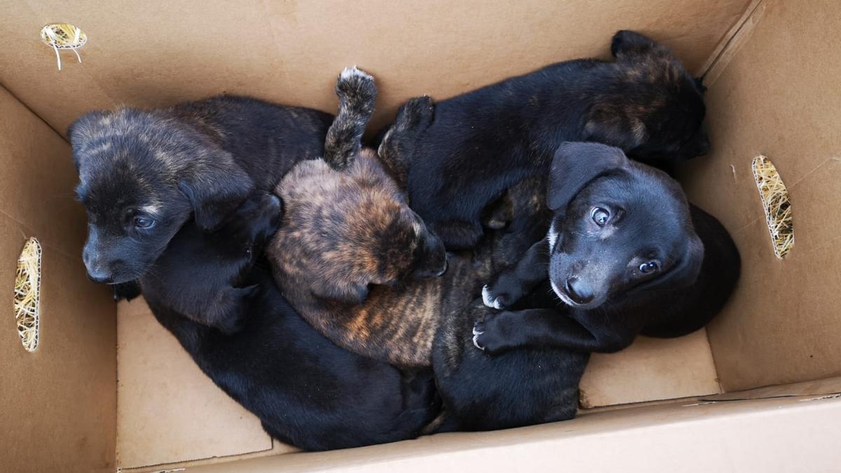 Seis de los perros abandonados
