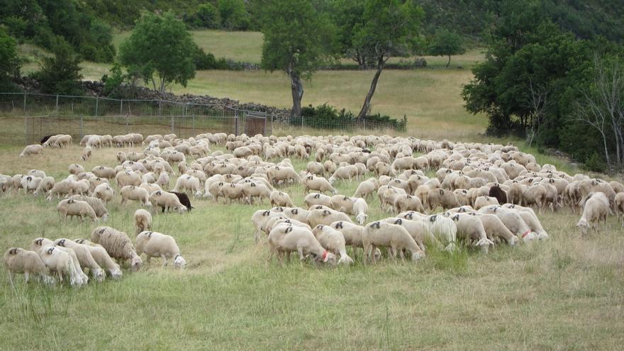 Autorizadas ayudas de 1,4 millones al pastoreo sostenible de ovino y a la gestión de pastizales de la Red Natura 2000