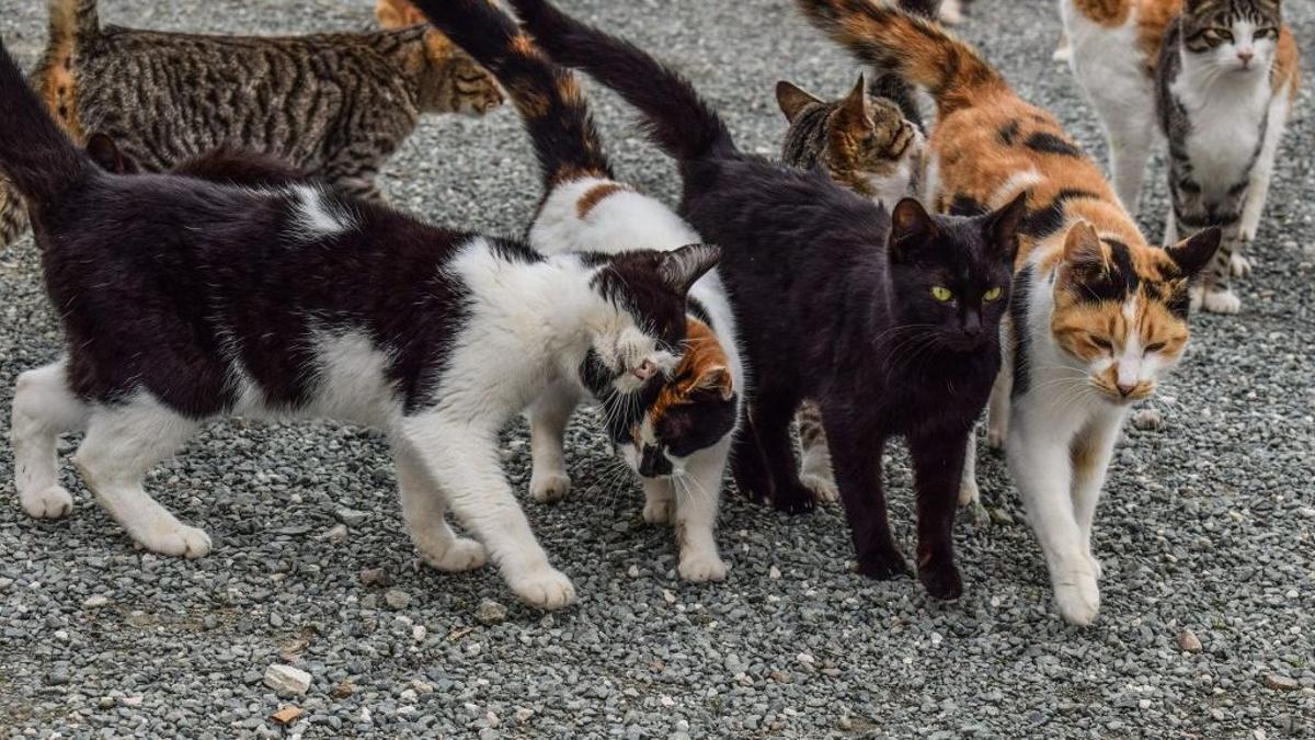 Colonia de gatos callejeros