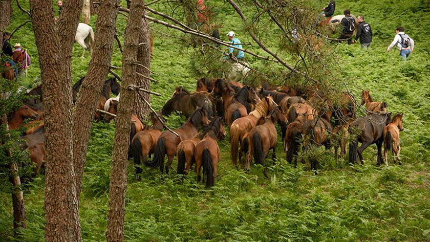 Manada de caballos en los montes de Sabucedo. Foto: El caballo de Nietzsche