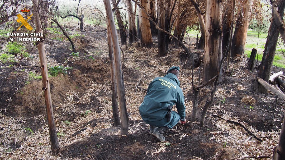 Un agente del Seprona investigando un incendio