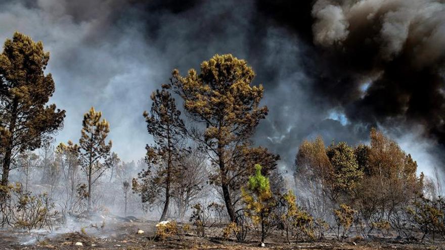 Prisión provisional sin fianza para un detenido por los incendios en Galicia