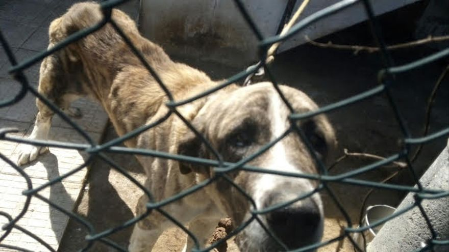 Abren expediente administrativo a un vecino de Loiu por tener animales en malas condiciones higiénico-sanitarias