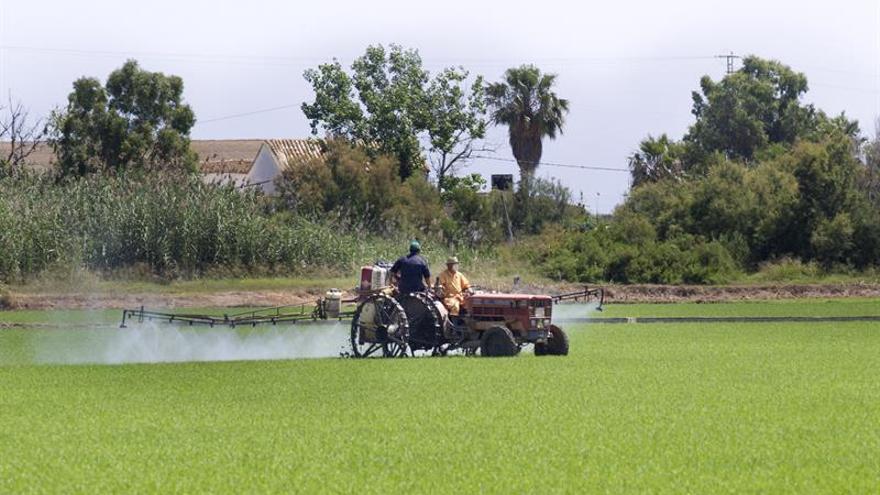 Albufera Valencia: una joya natural donde el arroz simboliza desarrollo rural