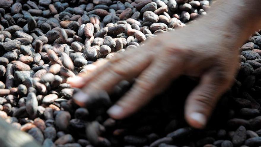 Latinoamérica produce el 80 % del cacao selecto del mundo