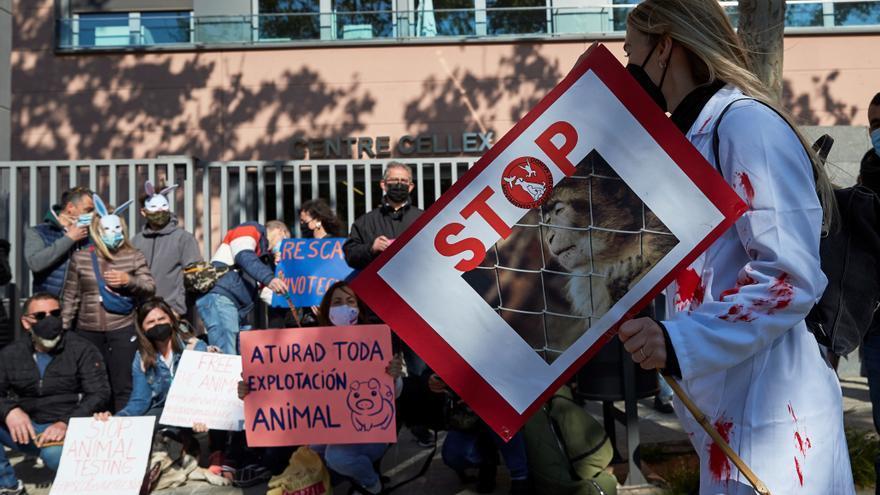 Animalistas: Cataluña es la CCAA con más laboratorios que usan animales