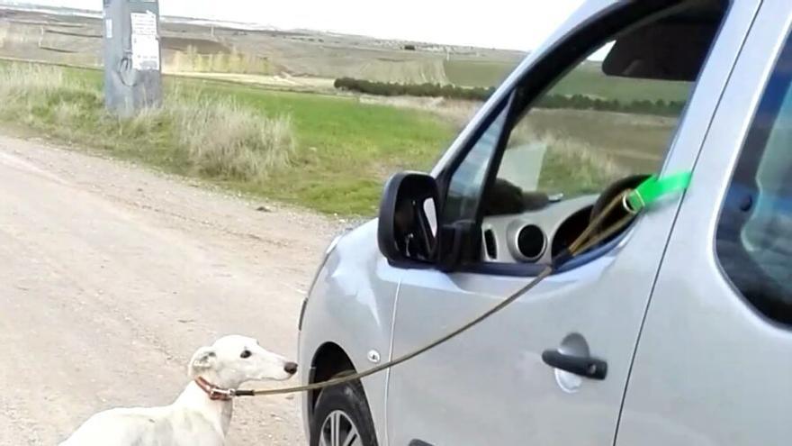Una de las fotos tomada por la denunciante, con el galgo atado al vehículo