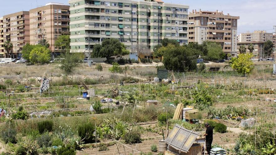 Vista panorámica de huertos urbanos en Benimaclet. Foto: Sumaya Barber
