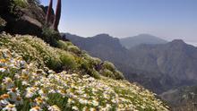 En la imagen, panorámica de La Caldera de Taburiente, en la primavera de 2014. Foto: Ángel Palomares.