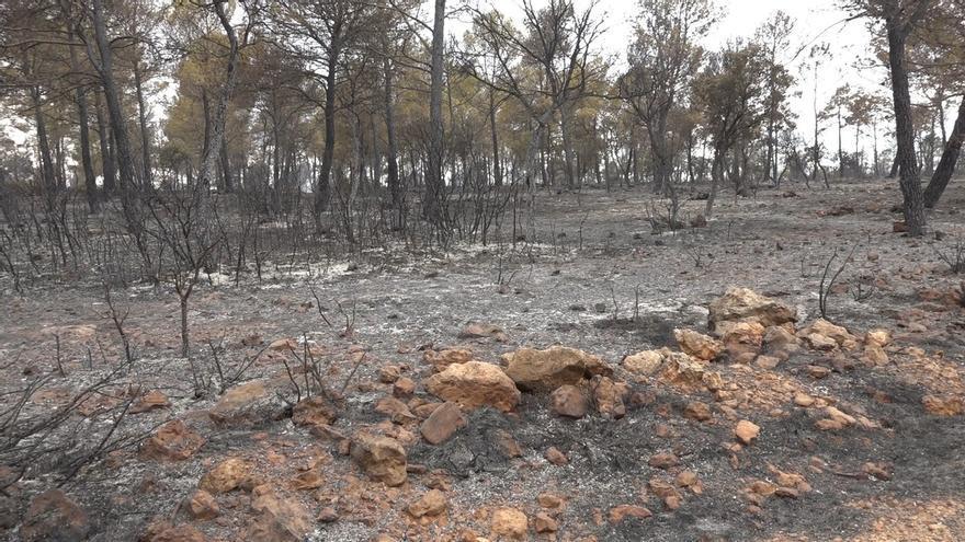Los incendios forestales afectaron hasta septiembre a 8.230 hectáreas en C-LM, un 41% más que en 2016