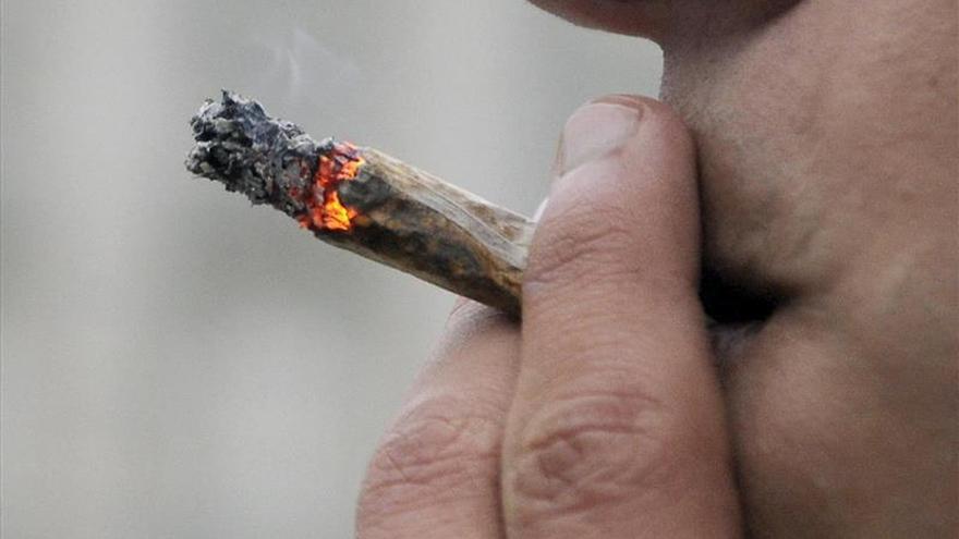 El PP de Donostia pide que no se impugne la ordenanza de clubes de cannabis