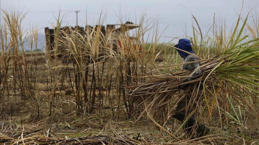 Monsanto anuncia el fin de sus operaciones en el sector azucarero de Brasil