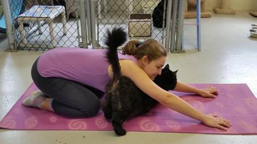 Los gatos tienen el temperamento perfecto para el yoga.