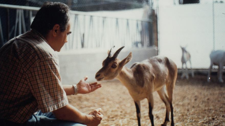 El investigador del CITA José Folch, con un ejemplar de macho cabra montés, en una foto de la época.
