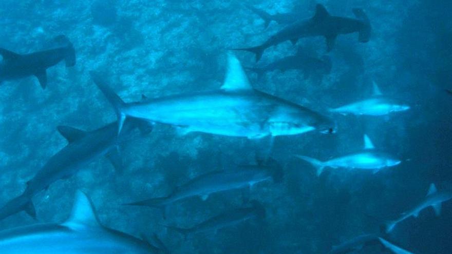 WWF compra una licencia de pesca de tiburones para proteger la Gran Barrera de Coral