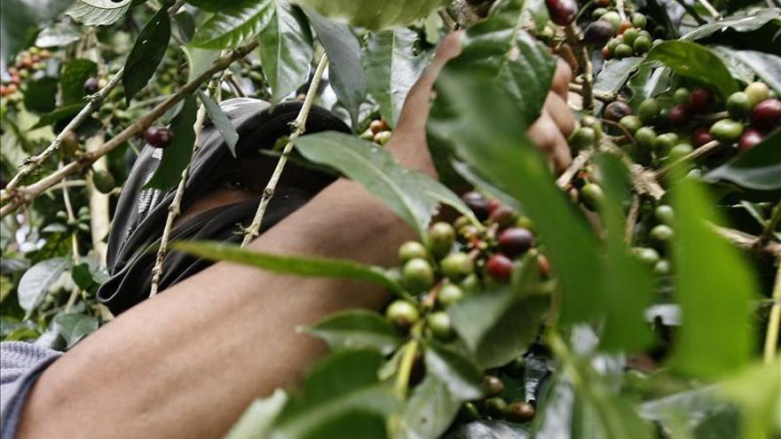 """""""Café de Colombia"""" demuestra que la protección de origen sirve en todo el mundo"""
