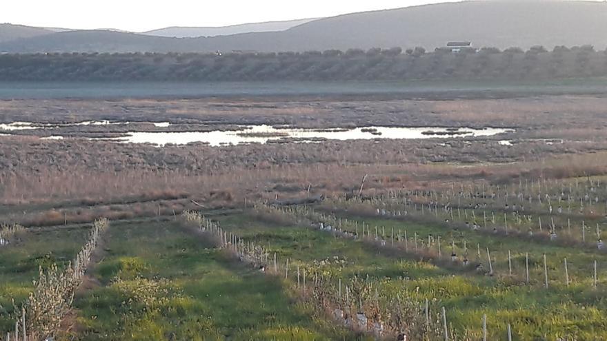 Cultivo intensivo en las Lagunas de las Navas de Malagón (Ciudad Real)