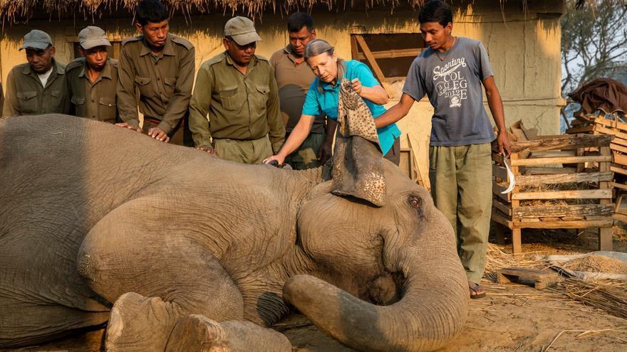 Carol Buckley mostrando a los mahouts las orejas enfermas de un elefante
