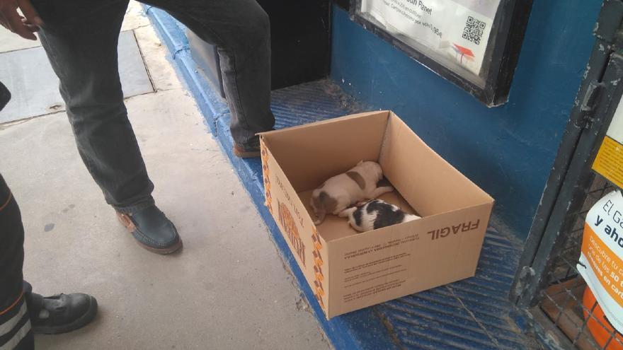 Cachorros abandonados en una caja de cartón en la calle