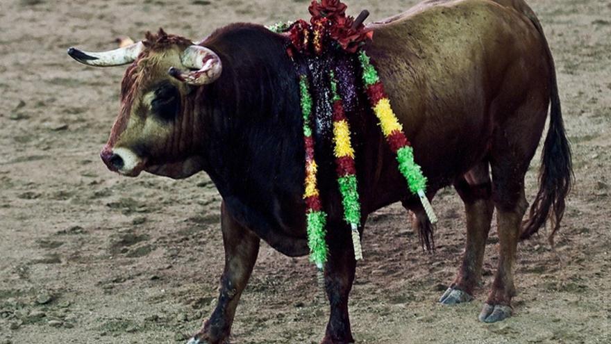 La tortura de un animal como fuente de ingresos. Foto: © The Animal Day / Jonás Amadeo Lucas