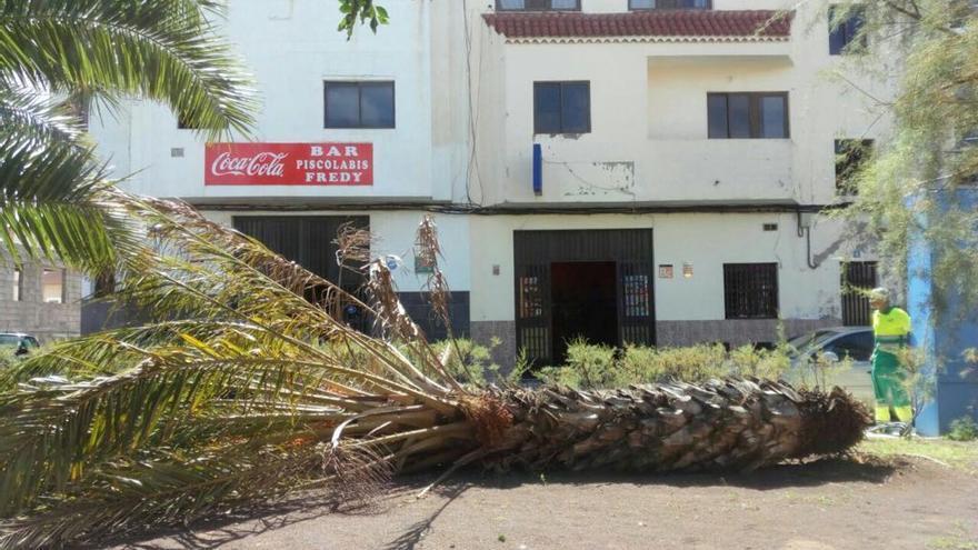 Palmera caída en Las Palmas de Gran Canaria