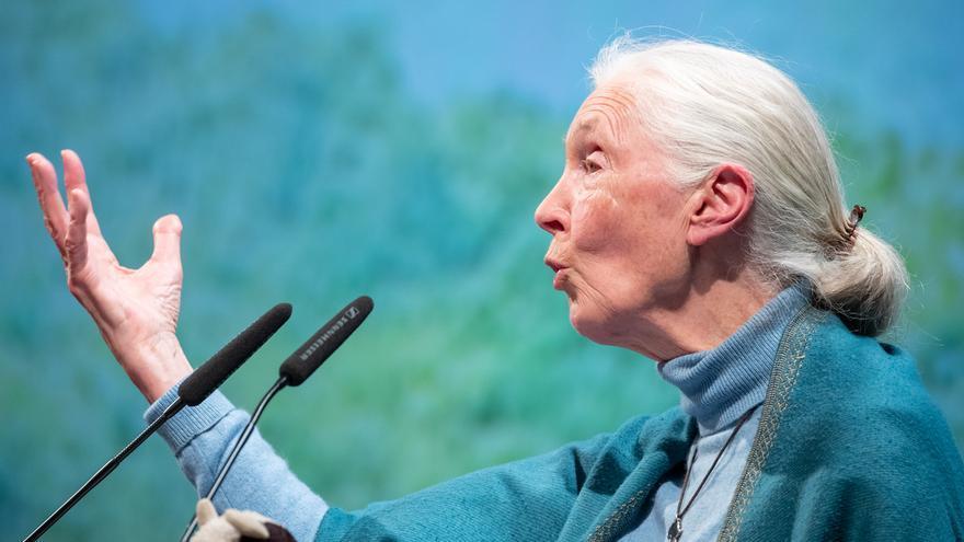 Jane Goodall estudia medidas legales contra organizador de Congreso de Conservación Activa por uso engañoso de su imagen