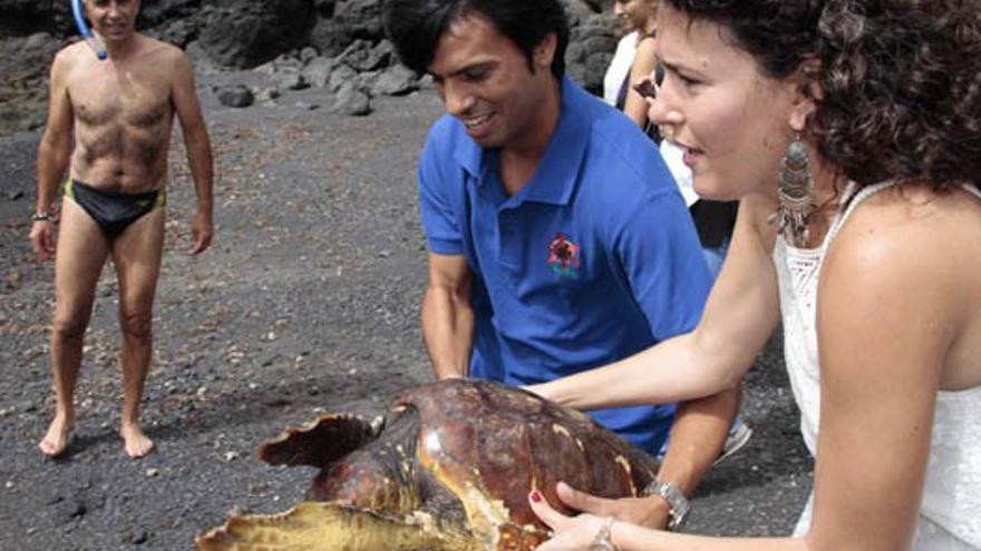 Un nuevo ejemplar de tortuga boba (Caretta caretta) ha podido regresar este jueves a su hábitat natural.