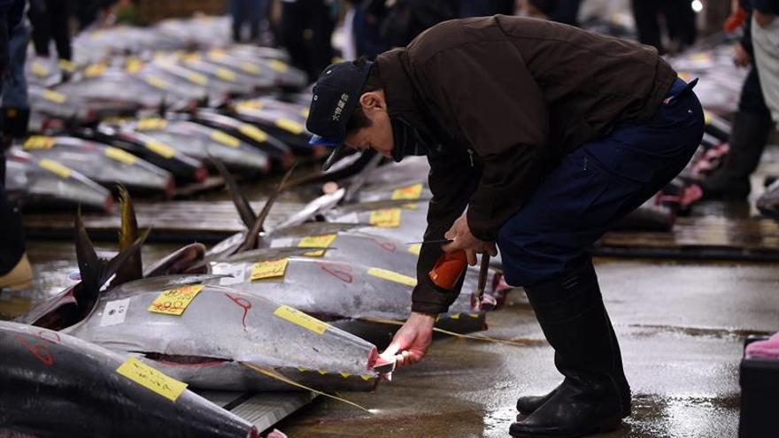El nuevo mercado de pescado de Tokio abrirá en octubre de 2018