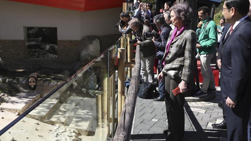 La reina Sofía amadrina a Chulina, la nueva osa panda del zoo de Madrid