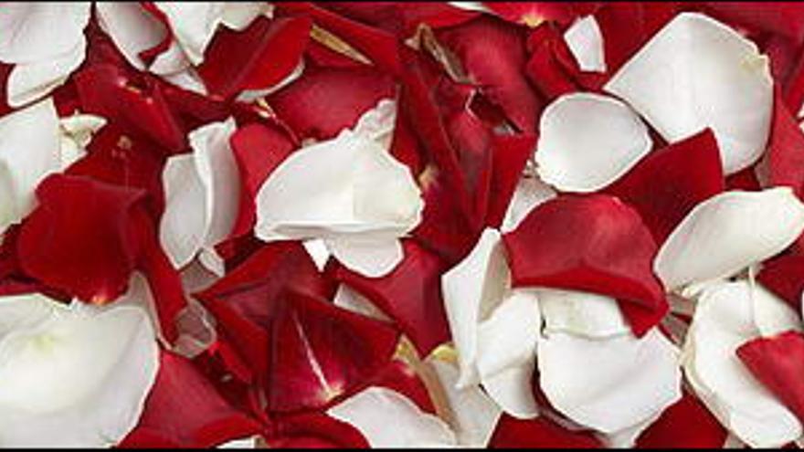 Pétalos de rosas blancas y rojas