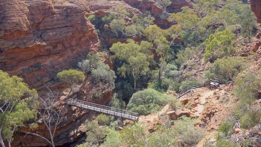 El bosque se aprieta entre las paredes verticales de King's Canyon. DGriebeling