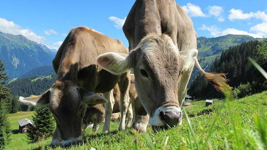 ¿Qué diferencia a la leche de pastoreo, de bienestar animal y ecológica?