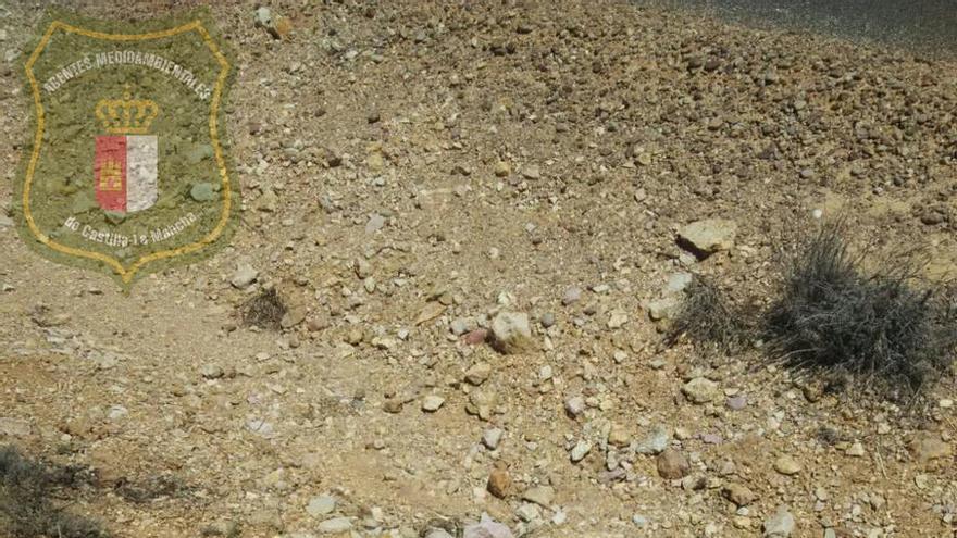 Lince encontrado en una carretera de Albacete a la altura de Munera