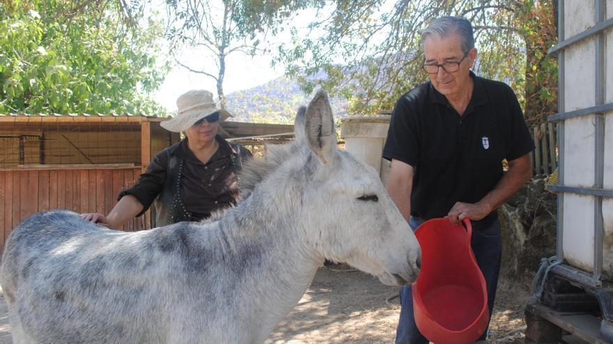 Julio Serrano y Alicia Perris, en su finca de Rozas de Puerto Real, con uno de sus burros