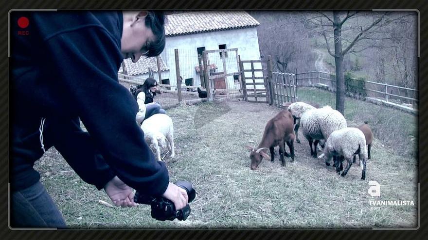 TV Animalista en Santuario Gaia