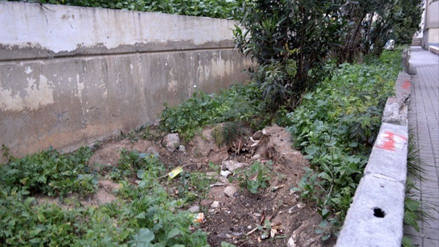 Los vecinos arrancaron un árbol porque las raíces de este destrozaba los bajantes de las viviendas. FOTO: Iago Otero Paz.