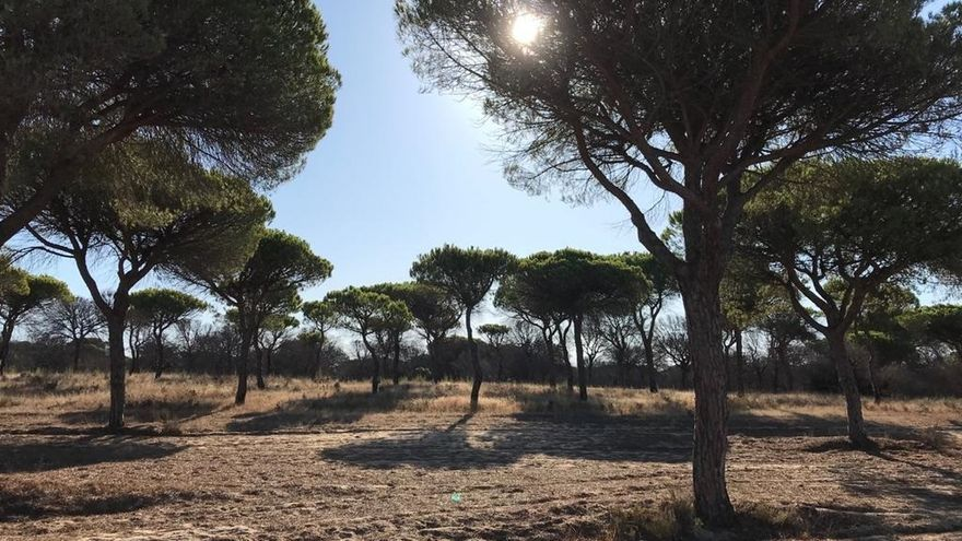 "Empresarios turísticos y de naturaleza piden un sello de ""turismo seguro"" para Doñana"